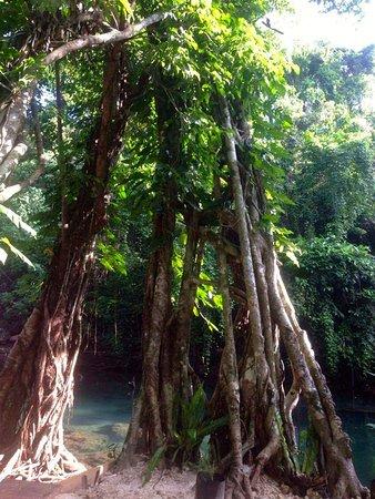 Éfaté, Vanuatu: Entrelacer...