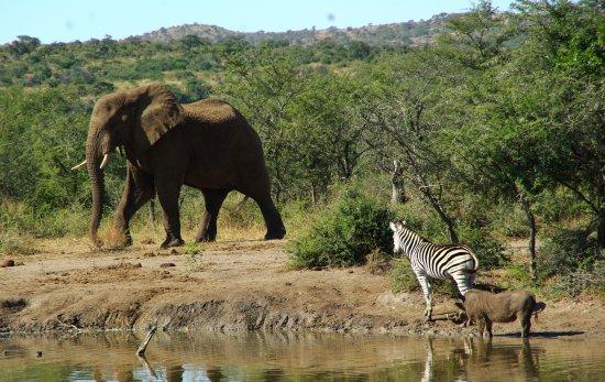Zululand Bild