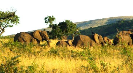 Zululand صورة فوتوغرافية