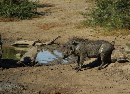Zdjęcie Zululand