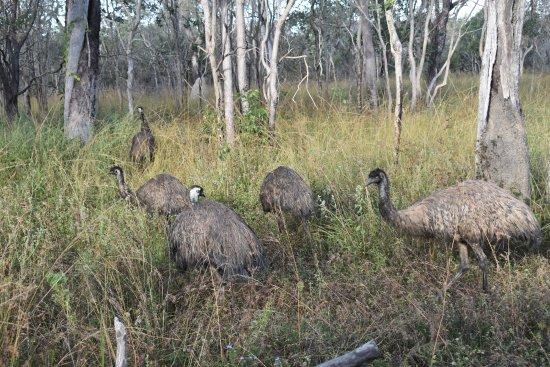 Jabiru Safari Lodge: Fellow guests?