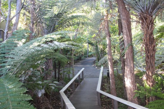 Pauanui, Nowa Zelandia: photo2.jpg
