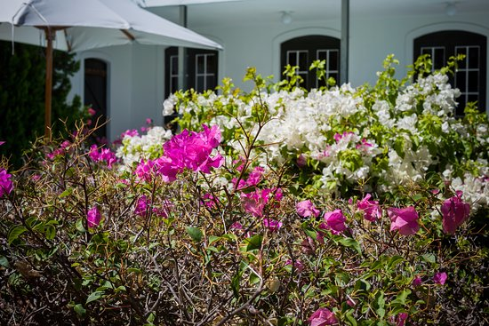Akademie Street Boutique Hotel and Guest House : Flowers were out in the courtyard