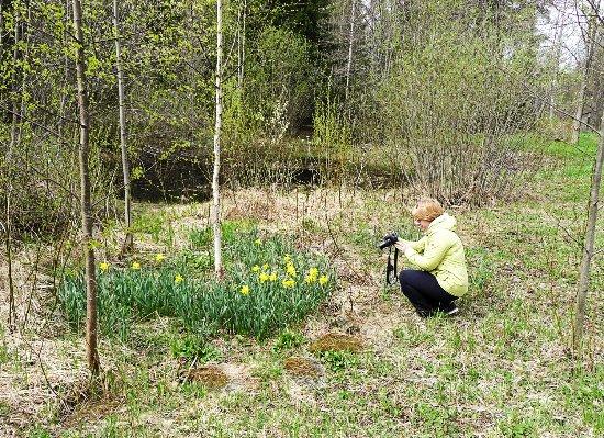 Joensuu, Finland: Открытая часть ботанического сада - вход свободный.