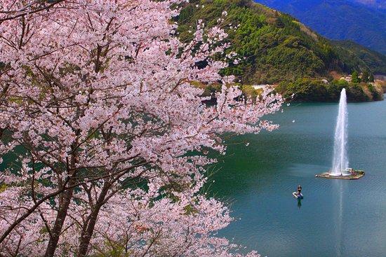 Mizukami-mura, Ιαπωνία: 桜満開2