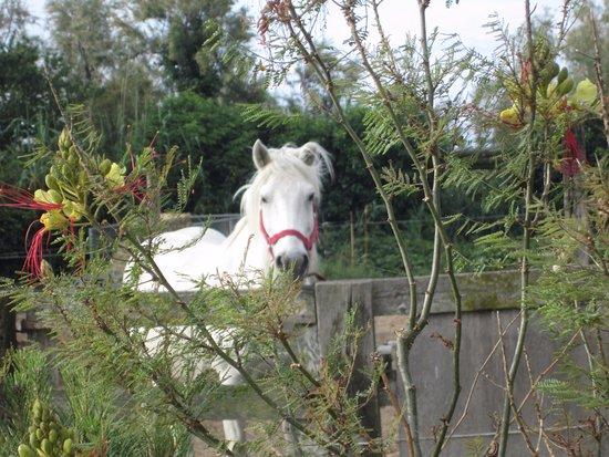 joli cheval blanc de l'auberge de la Fadaise.