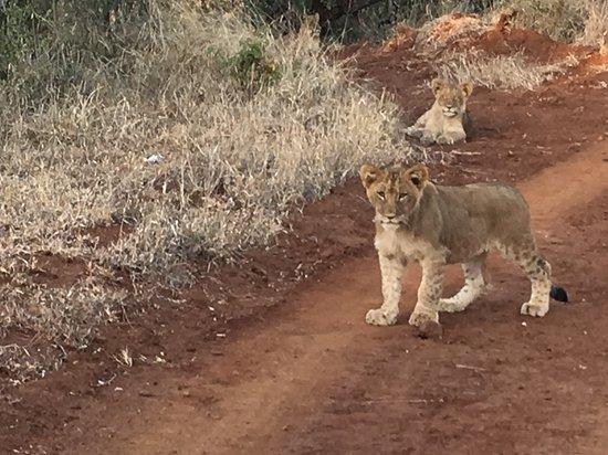 Obraz Amakhosi Safari Lodge