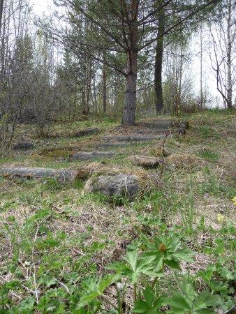 Joensuu, Finland: Открытая часть ботанического сада.