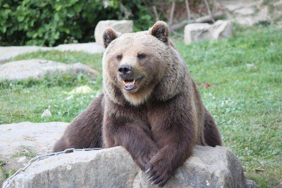 Wildnispark Zürich Langenberg: mama bear