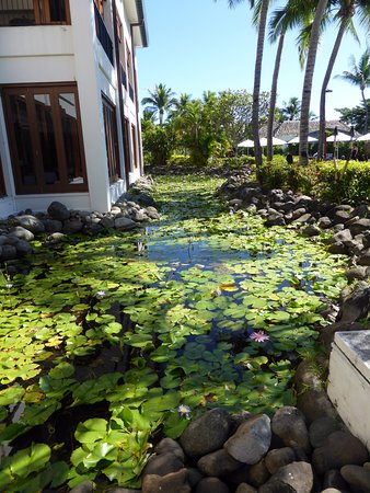 Lily pond outside main building