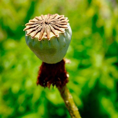 photo prise au Botanischer Garten der Universität