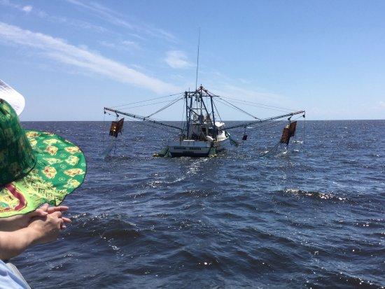 Shrimp boat picture of hurricane fleet eco daytours for Calabash fishing fleet