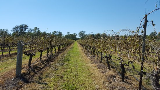 Branxton, Australia: Joie de Vivre Hunter Valley Tours