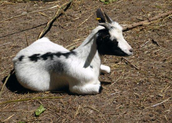 Forchtenberg, Alemania: Kleines Ziegengehege im Ochsengarten