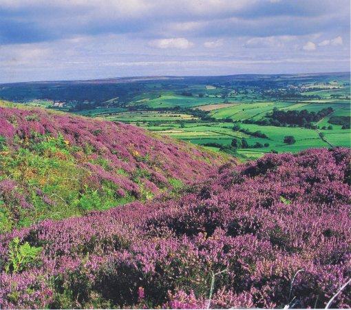 Osmotherley, UK: the surrounding North York Moors