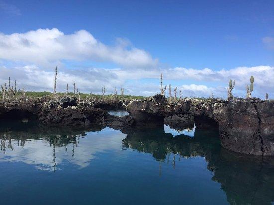 Iguana Crossing: Amazing scenery at Isabela Island