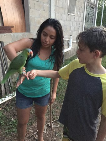 River Park Inn : Parrots, river, and mangoes!
