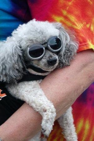 Volo, IL: Pet Parade :)