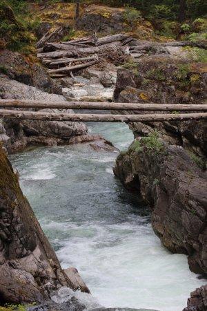 Little Qualicum Falls Provincial Park Picture
