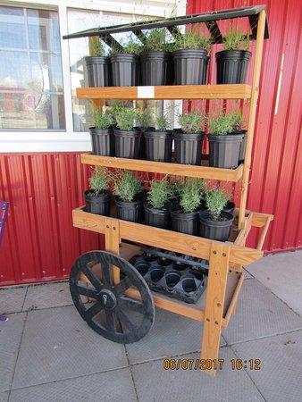 NEOB Lavender - Niagara Essential Oils & Blends : Outside display