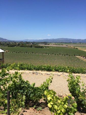 Viansa Winery and Italian Marketplace: photo0.jpg