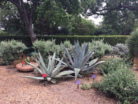 Dallas Arboretum Botanical Gardens Cactus