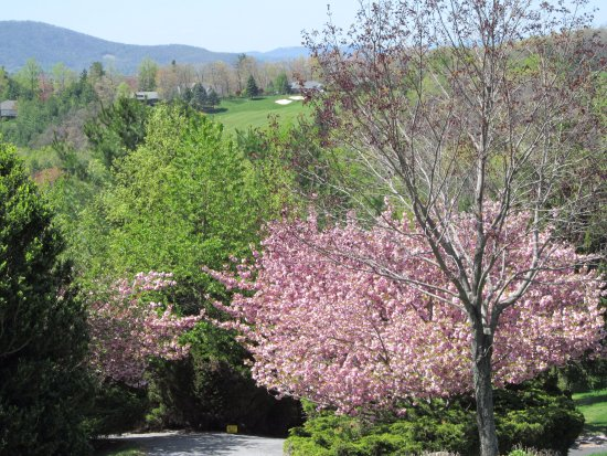 Roaring Gap, NC: Olde Beau Spring