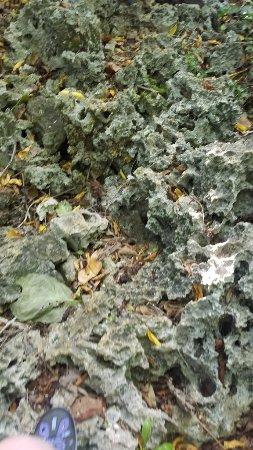 Atiu, Cook Islands: Coral Trail