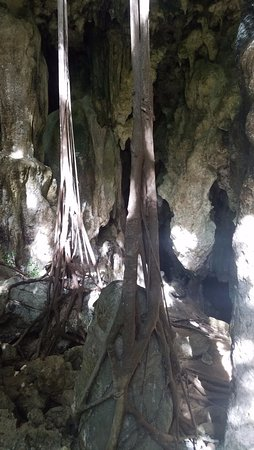 Atiu, Islas Cook: Caves and Roots