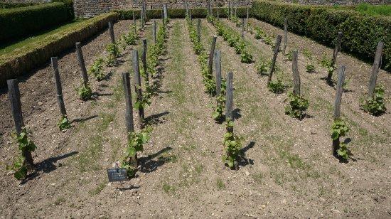 Barbirey-sur-Ouche, Francia: mini vignoble