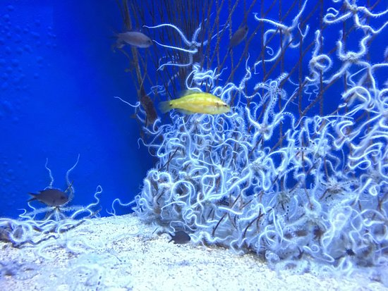Aquarium Pula: photo9.jpg