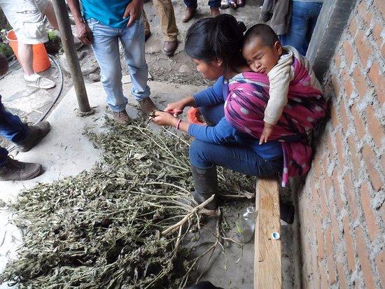 Toribio, Colombia: ZONA INDIGENA DEL DEPARTAMENTO DEL CAUCA: a 2 horas de la ciudad de Cali