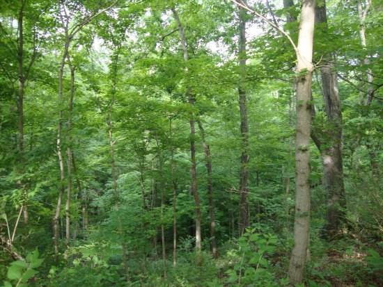 TownePlace Suites Huntington: Forest near the hotel is small but offers short hikes with a taste of nature.
