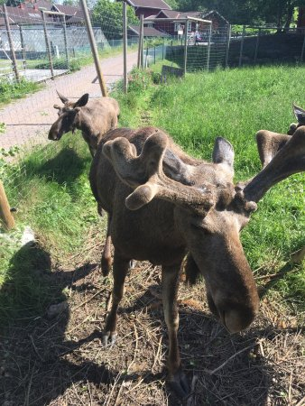 Malilla, Sweden: Nettes Klo als Deko ;-)