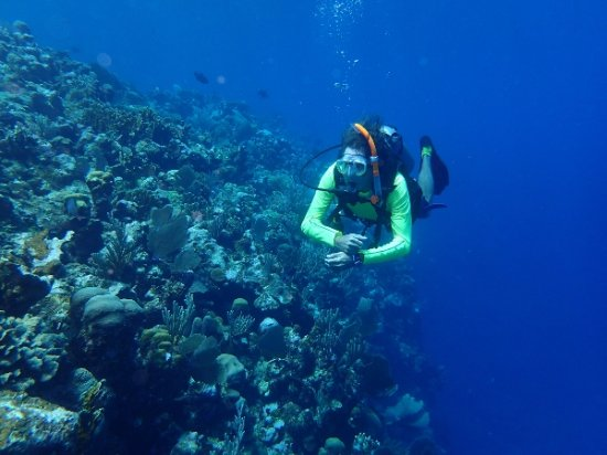 Sandy Bay, Honduras: Open Water Cert dive at Blue Island Divers Roatan - Great!