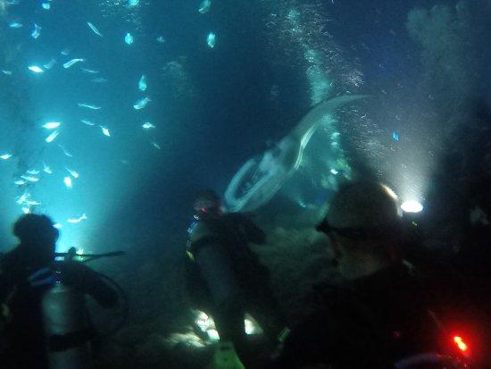 Pacific Rim Divers: photo1.jpg