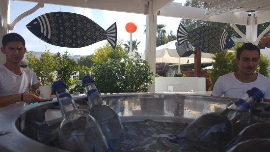 Mavi Suite Turkbuku : deniz kenarı bar ve şezlonglar
