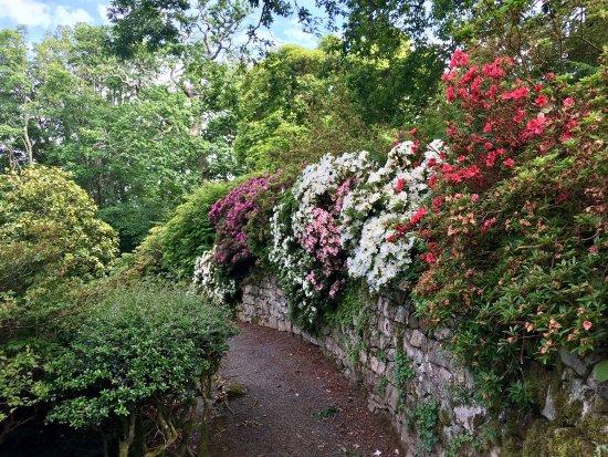 Llanfairpwllgwyngyll, UK: photo2.jpg