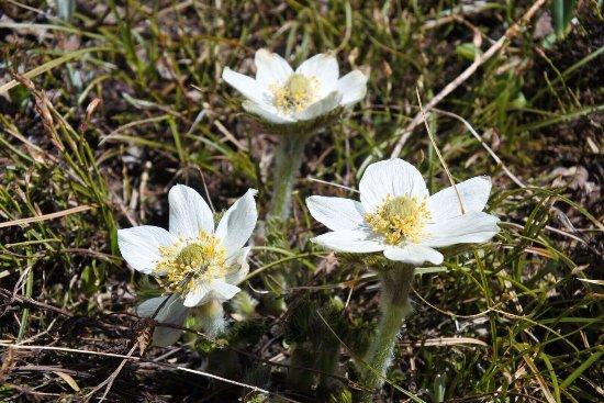 Sunshine Meadows: White Wildflowers