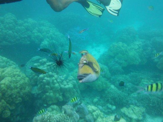 Khuraburi, Thailand: Snorkeling was amazing