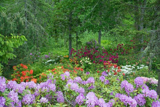 Saint Andrews, Canadá: Rhododendrons