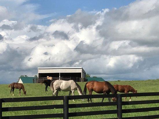 Eighth Pole Inn: Surrounding Horse Farms