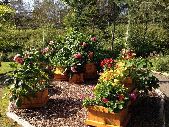 Une de nos plates bandes - Picture of Jardins de Doris, Matane ...