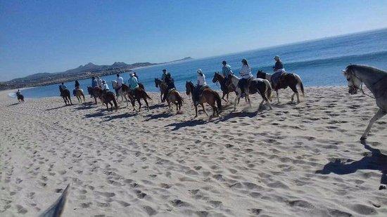 Bonanza Horseback Riding