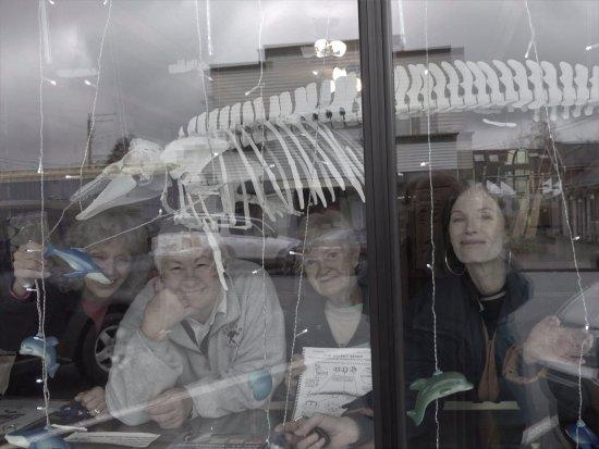 """แลงลีย์, วอชิงตัน: Volunteers and """"Maxine"""" the Harbor porpoise skeleton through the front window"""