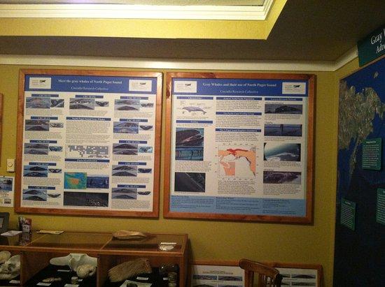 แลงลีย์, วอชิงตัน: N. Puget Sound Gray Whale Display by Cascadia Research