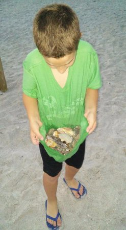 Gulf Towers Resort Motel: Great shell hunting!