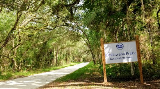 Ocklawaha, FL: Beautiful canopy road here at the entrance.