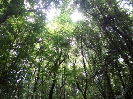 Hwansang Forest Gotjawal Garden