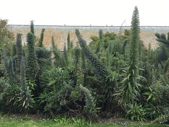 Saint-Vaast-la-Hougue, Francja: Viperines du cap, et autres plantes se sentent en parfaite sérénité, comme nous.  Les goélands a